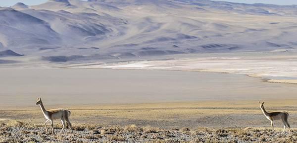 Reserva de la biosfera, Laguna Blanca