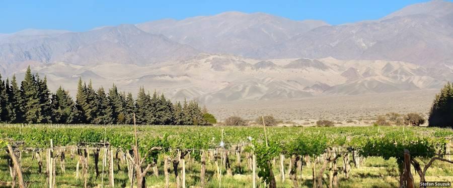 Viñas, cerros y médanos, Fiambalá Ruta del Adobe