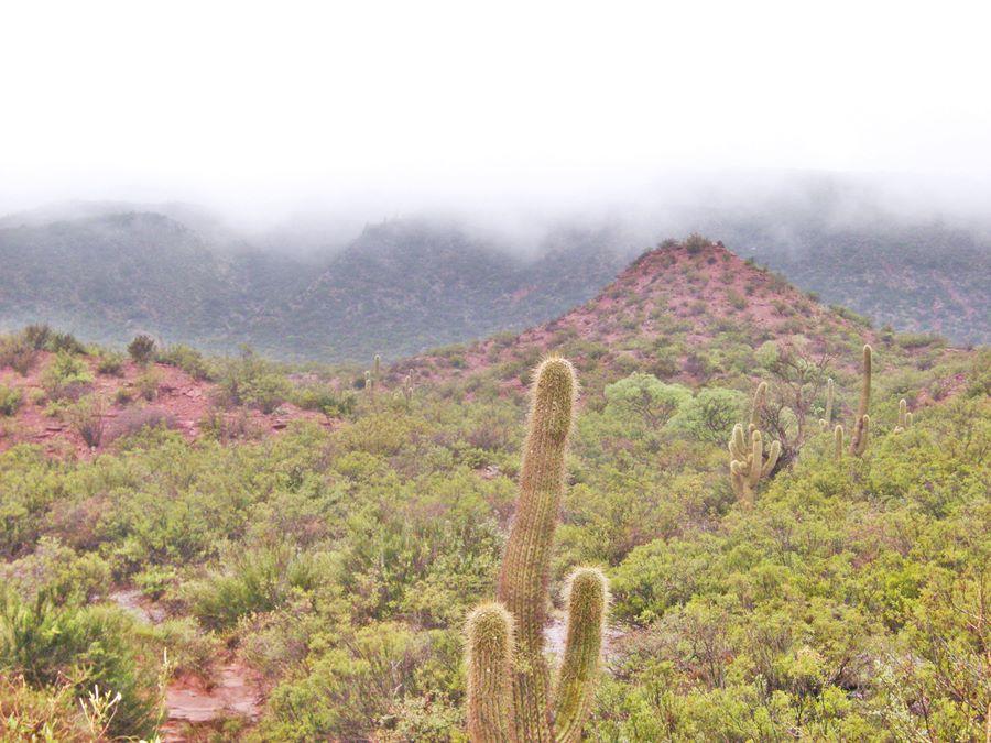 mountain slope with cardon cacti, red rocks, Cuesta de Miranda
