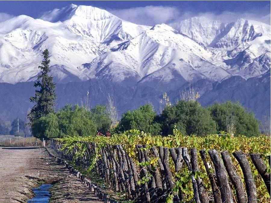 Tierra de Vino y viñedos Ruta 40, Mendoza Cuyo