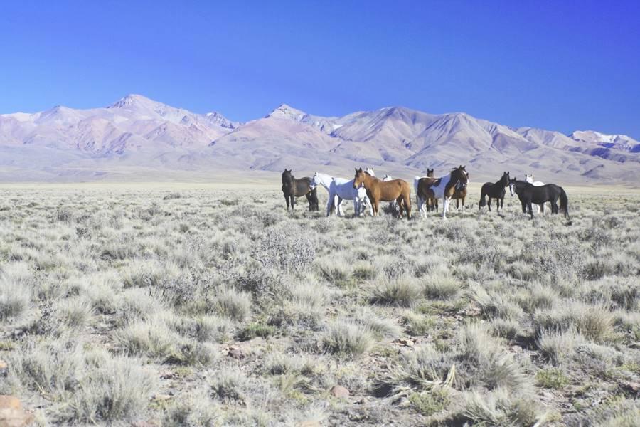 Paisaje entre Pareditas y El Sosneado, Ruta 40, Mendoza