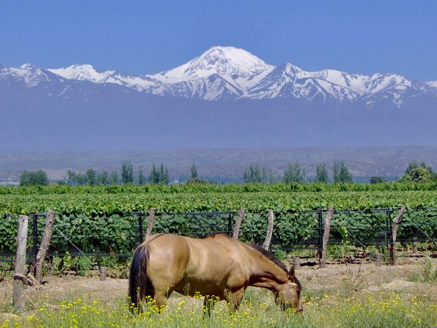 Vides y el volcán Tupungato y caballo en Tupungato Mendoza
