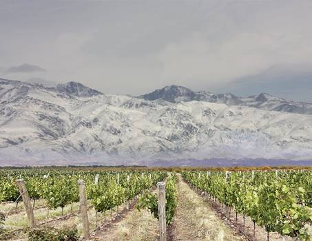 Mendoza: Andes and wine