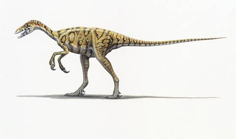 El dinosaurio Eoraptor