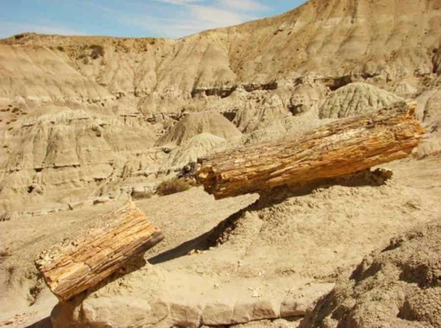 troncos fósiles cerca de La Leona - TripAdvisor