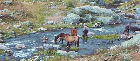 Caballos en Los Sosa, Tafí del Valle