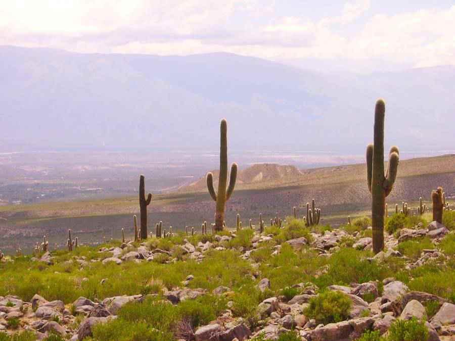 Cardones en las Cumbres Calchaquíes Tafí del Valle, Tucumán