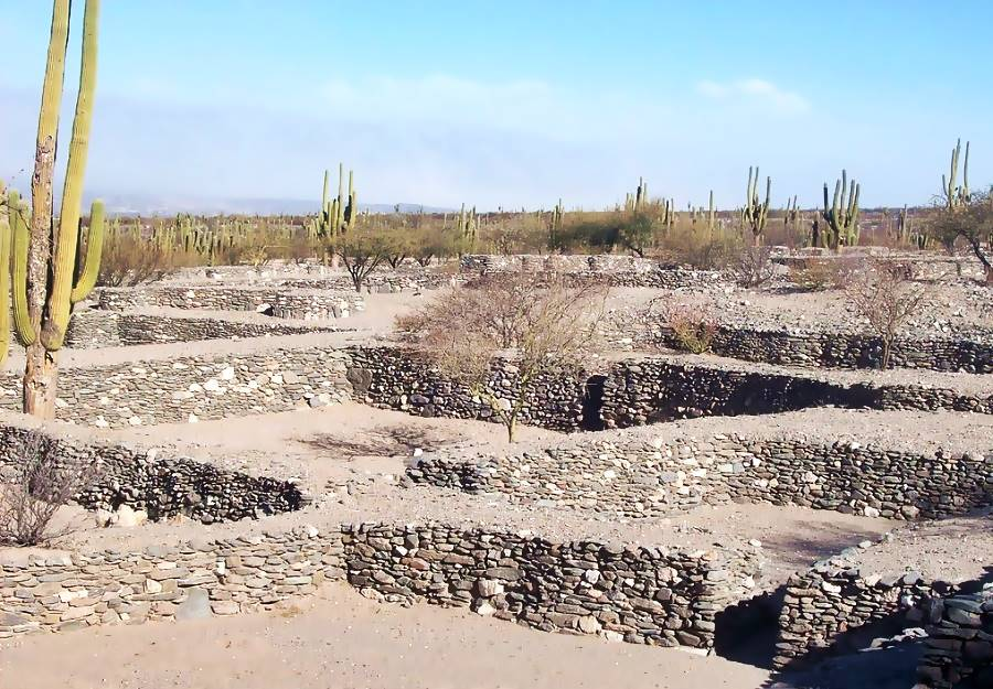 stone walls and cardon cacti in the Quilmes ruins